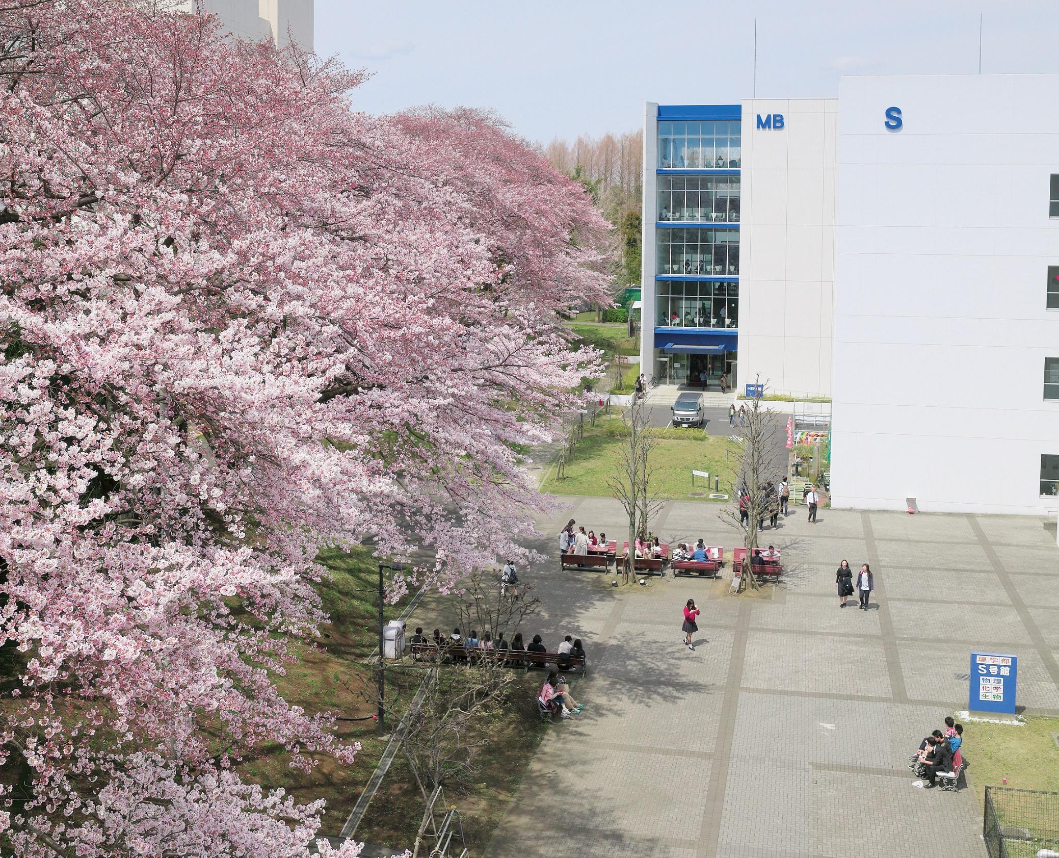 「北里大学 相模原キャンパス」の画像検索結果